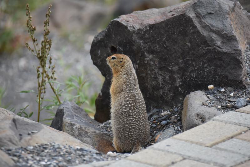 Eielson Visitor Center, Denali National Park, AK, USA