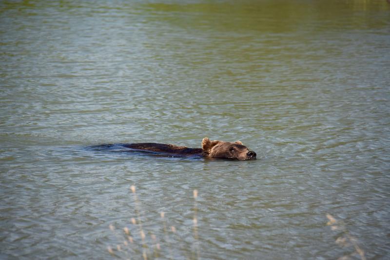 Alaska Wildlife Conservation Center, AK, USA