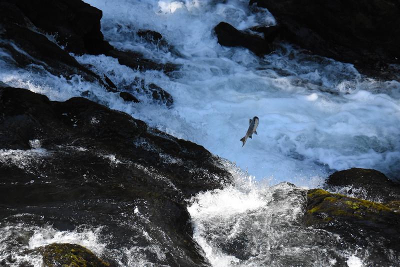 Russian Falls, Kenai Peninsula, AK, USA