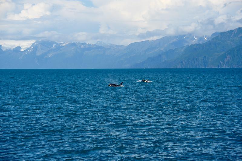 Kenai Fjords National Park, AK, USA
